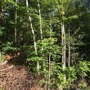 ESTATE lot Oak Hills Belleville Belleville Area image 6
