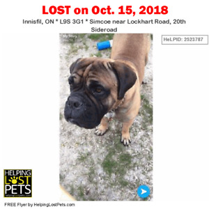 LOST DOG INNISFIL, ONTARIO