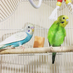 Budgies/cage/supplies