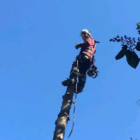 Professional & Dependable Tree Service, Removals and Pruning!