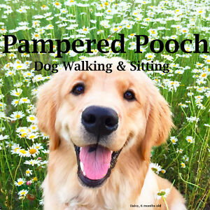 Pampered Pooch, Dog walking & Sitting Services