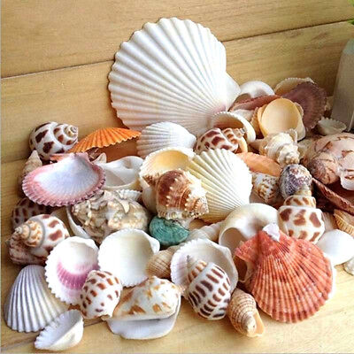 Diy Nautical Decor (Aquarium Beach DIY Mixed 100g Seashells Nautical Decor Table Wedding)
