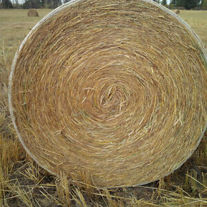 Wheat/Barley Green-Feed Bales