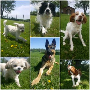 Accepting New Dogs for Summer Stays & Daycare Days Balanced K9