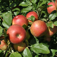 Orchard Workers Needed in East Kelowna