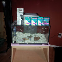 Fluval Edge 6 gal fish tank with extras