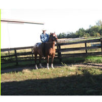 The  Business  Of   Equine   Appraising.
