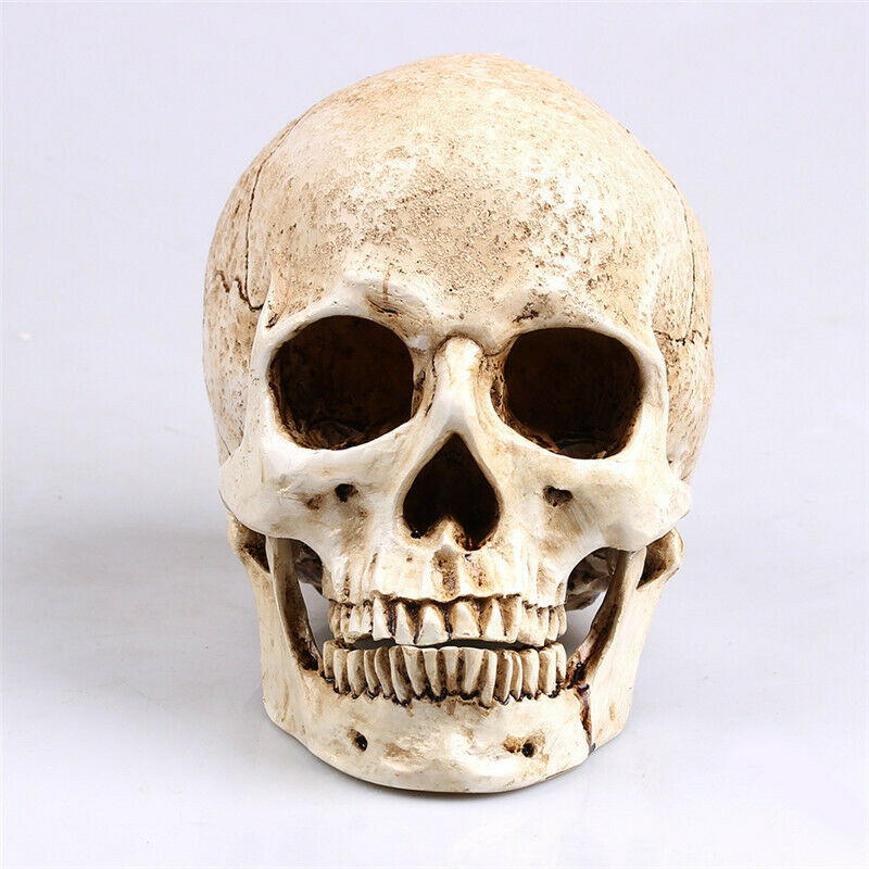 Resin Human Skull Replica Model Realistic Skeleton Handicraft Decor Lifesize US