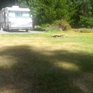 Rv site/lot to park and live