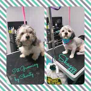 One on one pet grooming  Peterborough Peterborough Area image 3
