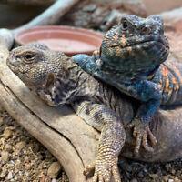 passion geckos saguenay TOUS RESERVEZ