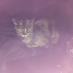 3 month old litten looking for forever home