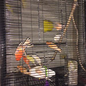 Bird  and bird cages available