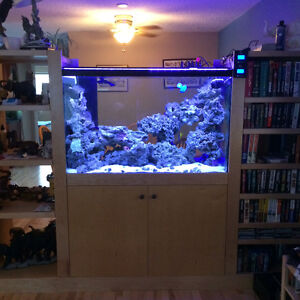 Salt water fish and live rock for sale