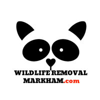 Raccoon Removal Markham - Affordable Wildlife Control