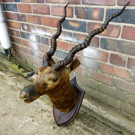 1920's taxidermy deer head