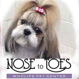 Nose To Toes Dog & Cat Grooming by Certified Master Groomer