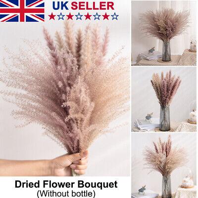 Home Decoration - 10-30x Natural Dried Pampas Grass Reed Flower Bunch Home Wedding Bouquet Decor