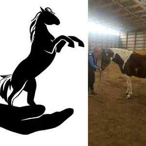 Hands to Hooves Equine Massage Therapy  Strathcona County Edmonton Area image 1