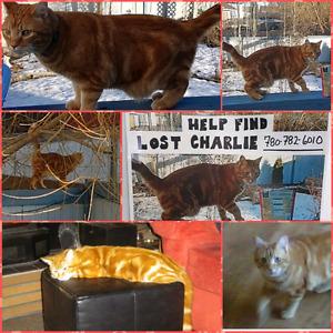 Charlie is still missing in Sherwood Park/Summerside