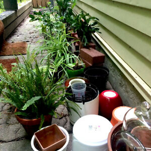 Plants and some Pots $1-$10
