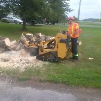 BAYRIDGE TREE SERVICE STUMP CUTTING