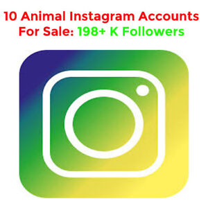 10 ANIMAL Instagram Accounts For Sale – BEST OFFER