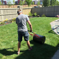 Sod and installation