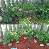 Cleaning, gardens and yard clean up, decorating and organizing