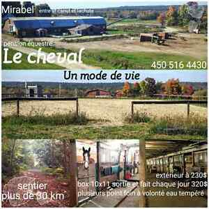 Pension chevaux mirabel