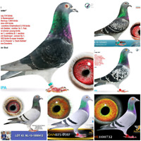Come fly with us Race in the Nova Sctioa Racing Pigeon Club