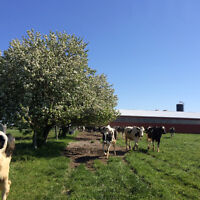 Organic dairy farm for general labour