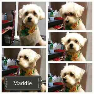 Pawz Above the Rest Dog Grooming Xmas opening available still London Ontario image 8