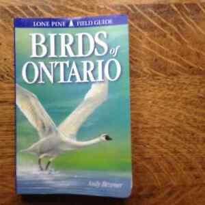 Birds of Ontario by Andy Bezener  Lone Pine Field Guide