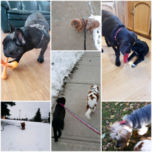 Dog walking/let out services available