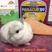 Panacur Worming for Rabbits Booragoon Melville Area Preview