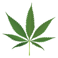 Work from home in the Cannabis Industry!