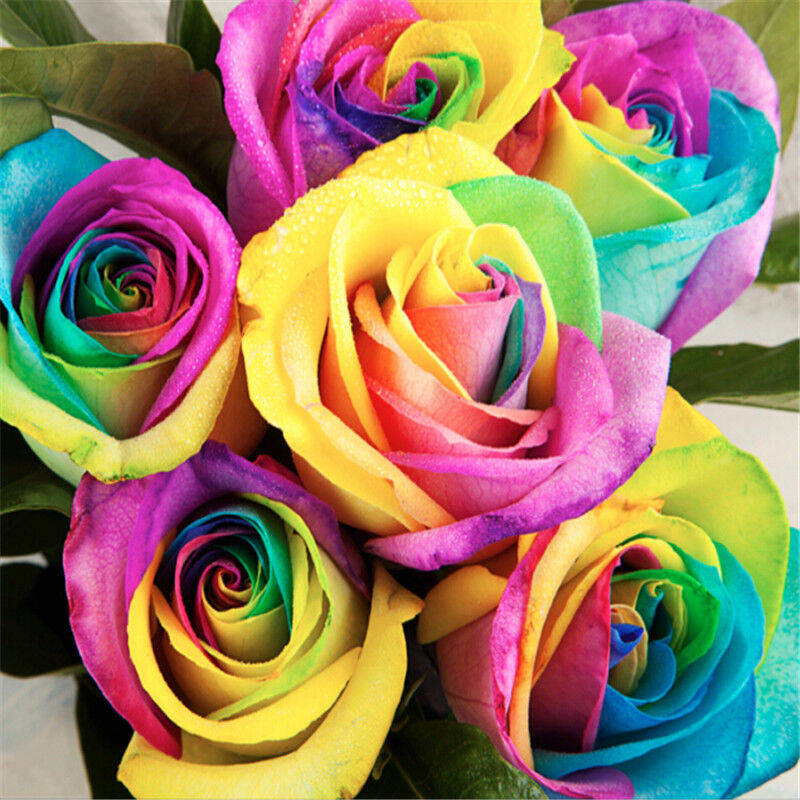 Lots 200pcs colorful rainbow rose flower plant seeds home for Growing rainbow roses from seeds