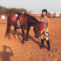 Beginner's Horse for Lease, Includes Lessons