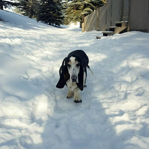 Free Dogs To Give Away In Edmonton