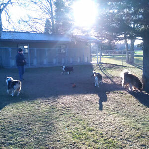 Birchview Dog Boarding - 30 mins from south end of Cambridge Cambridge Kitchener Area image 4