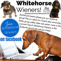 Whitehorse Wieners - Dachshund Group