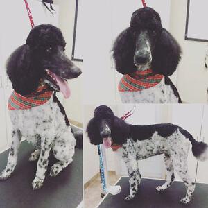 Pampered Paws Dog Grooming! Kitchener / Waterloo Kitchener Area image 5