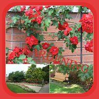 Summer to Fall Gardening
