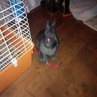 petit lapin nain pollonais tout compris très gentil !