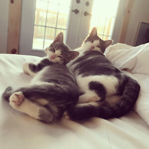 Two cats need new homes