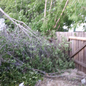 BRANCHES and ALL JUNK REMOVAL LOW LOW LOW RATES 780 240 5567