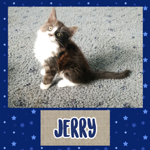Available for Adoption - Jerry