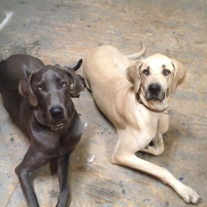2 dogs lost in Pepper Creek area this afternoon.