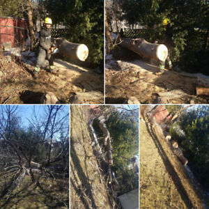 Affordable Tree Service-Tree Removal/Pruning-Hedge&Shrub Removal